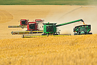 Four combines harvest duram wheat.<br /> Carmichael<br /> Saskatchewan<br /> Canada