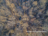 63808-3112 Aerial view of bare trees at sunset Marion Co. IL