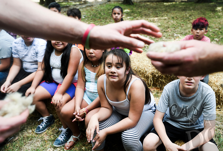 NWA Democrat-Gazette/CHARLIE KAIJO Isabel Navarro, 9, watches as famers pass around wool from a sheep during the Sheep to Shawl event, Thursday, October 4, 2018 at the Shiloh Museum in Springdale.<br /><br />Students learned how fibers like wool and cotton are processed and turned into clothing through demonstrations and hands-on activities.