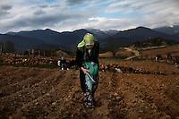 BULGARIA, Lazhnitsa, April 17, 2011. A Bulgarian muslim woman works in the field near the remote village of Lazhnitsa in the Rhodope Mountains. southern Bulgaria. Bulgarian Muslims, which today are nearly 8% of the country's population and the largest muslim minority community in the European Union, revived their cultural and religious traditions after the fall of communist regime in Bulgaria in 1989. .BULGARIE, Lazhnitsa, 17 Avril 2011. Une Bulgare de confession musulmane travaille dans les champs près du petit village de Lazhnitsa dans les montagnes des Rhodopes en Bulgarie. La minorité musulmane qui représente aujourd'hui près de 8% de la population totale du pays et qui est la plus large majorité musulmane dans les pays de l'Union Européenne a ravive ses traditions culturelles et religieuse après la chute du régime communiste Bulgare en 1989.
