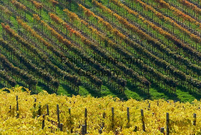 Italien, Piemont, Region Monferrato: Weingut bei Serralunga di Crea (Detail)   Italy, Piedmont, Region Monferrato: wine growing estate near Serralunga di Crea (detail)