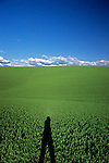 Silhouetted person standing in front of cultivated fields and fresh crops planted Eastern Washington State USA.