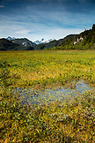 USA, Alaska, Redoubt Bay, Big River Lake, the floating marsh near Redoubt Bay