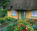 County Limerick, Ireland<br /> Cottage with thatched roof and dahlia garden in the village of Adare