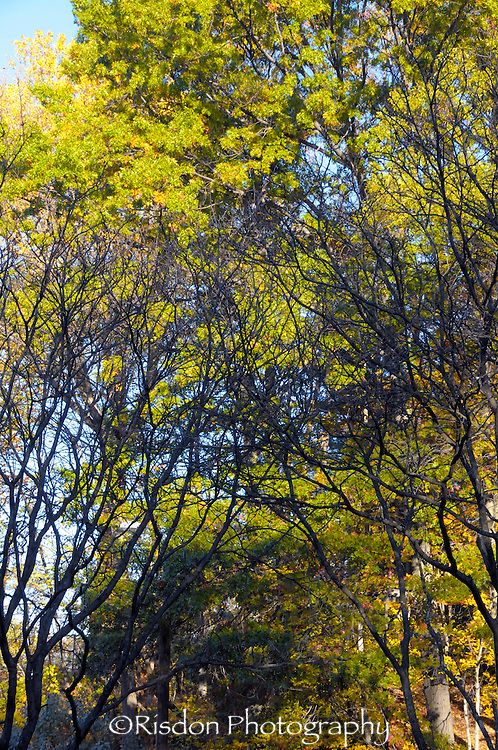summer trees, vertical trees