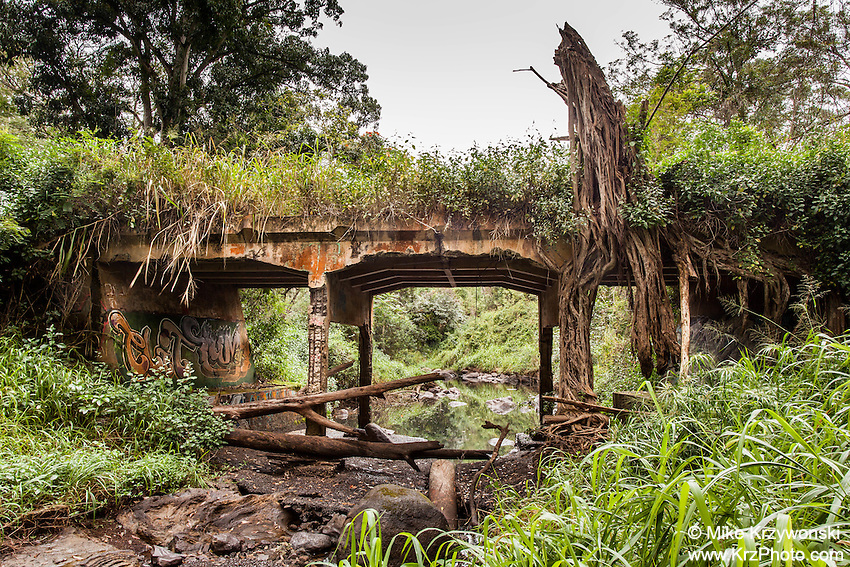 Abandoned overgrown bridge over a river bed near Schofield Barracks Army Base, Oahu