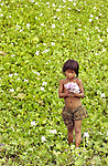 A young girl pauses while collecting water hyacinths in front of her home in rural area of Cambodia.  Many girls are sold or forced into prostitution in their teens, sometimes by their own parents.  (ELLEN JASKOL/ROCKY MOUNTAIN NEWS)..