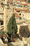 "Israel, Jerusalem Old City, a cypress tree at the Greek Orthodox ""Metochion of Getsemane"" opposite of the Church of the Holy Sepulchre, the minaret of the Mosque of Omar is in the background"