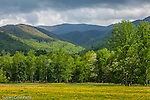 A wildflower meadow surrounded by the Smoky mountains in Cades Cove, Great Smoky Mountains National Park, TN, USA