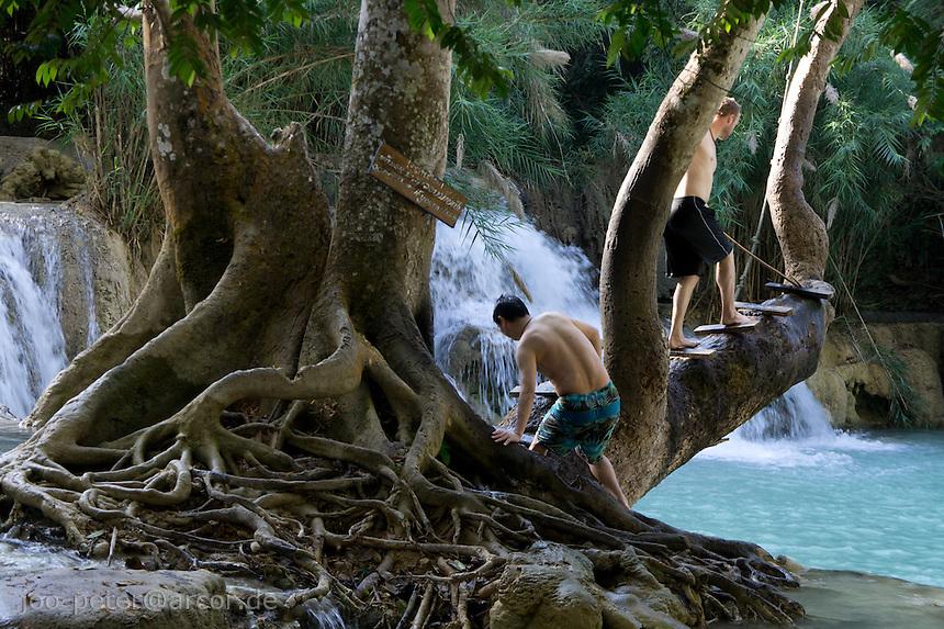 two men  climb a tree to jump into Khuang Si waterfall close to Luang Prabang, Laos, 2012