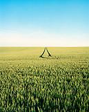 FRANCE, Burgundy, wheat field against clear sky, Chablis