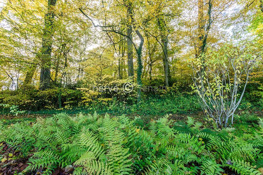 France, Loire-et-Cher (41), Chambord, château de Chambord, le jardin anglais en automne