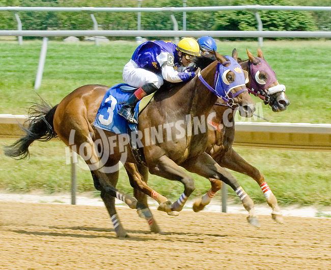 Baileys Beach winning at Delaware Park on 6/28/12