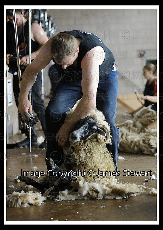 22/06/2008   Copyright Pic: James Stewart.File Name : sct_jspa06_sheep_shearing.HAMISH MITCHELL RETAINS HIS SCOTTISH CHAMPIONSHIP TITLE  AT THE ROYAL HIGHLAND SHOW, EDINBURGH......James Stewart Photo Agency 19 Carronlea Drive, Falkirk. FK2 8DN      Vat Reg No. 607 6932 25.Studio      : +44 (0)1324 611191 .Mobile      : +44 (0)7721 416997.E-mail  :  jim@jspa.co.uk.If you require further information then contact Jim Stewart on any of the numbers above........