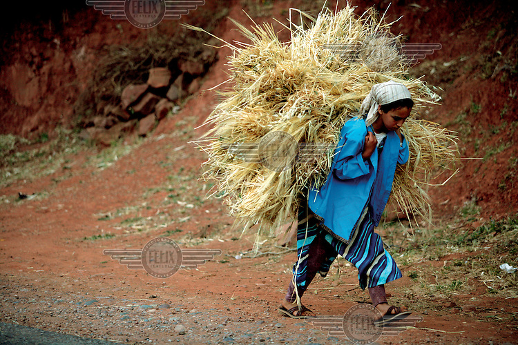 A girl carries hay to feed livestock..