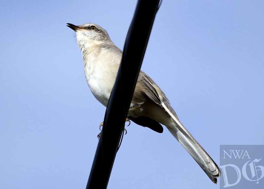Courtesy photo/PHYLLIS KANE<br />LAKESIDE PERCH<br />A northern mockingbird rests on the shore of Lake Fayetteville. Phyllis Kane of Fayetteville took the picture Oct. 6.