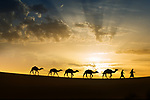Silhouettes of a camel (dromedary) caravan with nomads in the desert against colorful cloudy sky at sunrise.
