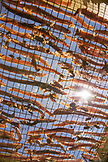 USA, Hawaii, The Big Island, strips of fish drying on a rack at da fish house in Kawaihae