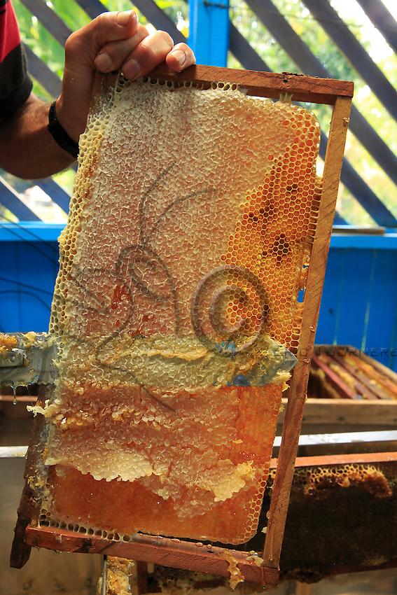 The wax that closes the wax cells full of honey is cut.///La cire qui ferme les cellules de cire remplies de miel est coupée.