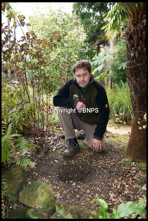 """BNPS.co.uk (01202 558833)<br /> Pic: LauraDale/BNPS<br /> <br /> Tim Newman at the Abbotsbury Sub-Tropical Gardens, at the site of a missing plant.<br /> <br /> The increase in thefts of rare and unusual plants is forcing botanical gardens to take extreme measures to keep green-fingered thieves at bay.<br /> <br /> Garden staff have had to install security cameras and patrol their plants to ensure people armed with rucksacks and hidden gardening tools don't dig them up.<br /> <br /> Between 10 to 15 exotic plants have been stolen from the Sir Harold Hillier Gardens near Romsey in Hampshire this year and Abbotsbury Subtropical Gardens in Dorset has seen about a dozen """"choice"""" plants disappear.<br /> <br /> At Harold Hillier Gardens they suspect most of the thefts have been carried out at night, but at Abbotsbury brazen thieves have been digging plants up at the root in daylight when members of the public could walk past at any minute.<br /> <br /> Barry Clarke, a botanist at Sir Harold Hillier Gardens for 12 years, said the problems with theft seem to have got much worse in the last five years.<br /> <br /> With 180 acres and only 15 garden staff looking after 42,000 plants, they just can't watch every part of the garden and people are making off with rare and expensive plants that are almost impossible to replace.<br /> <br /> Expensive peonies, specialist snowdrops and mahonias so rare they haven't been named yet were among the plants taken and staff have resorted to installing motion cameras to catch the culprits."""