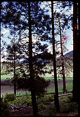 View thru pine trees - location unknown.<br /> D&amp;RGW