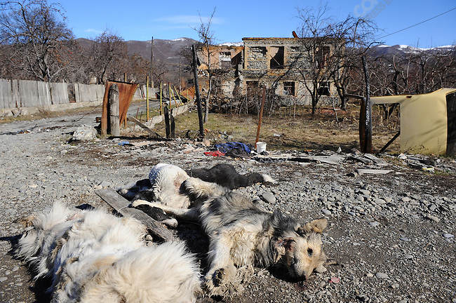 On the side of the road next to the abandoned and burnt out formerly Georgian populated village of Khekhvi, north of the South Ossetian capital Tskinval, and since the war deserted by its former inhabitants, lay the bodies of stray dogs that had been killed - an official said that the dogs had become savage since the departure of the villagers and had started to attack pedestrians. February 12, 2009