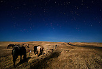 Seven horses gather along a barbed-wire fence in Central Montana under the light of a full moon with a highway stretching off into the distance.