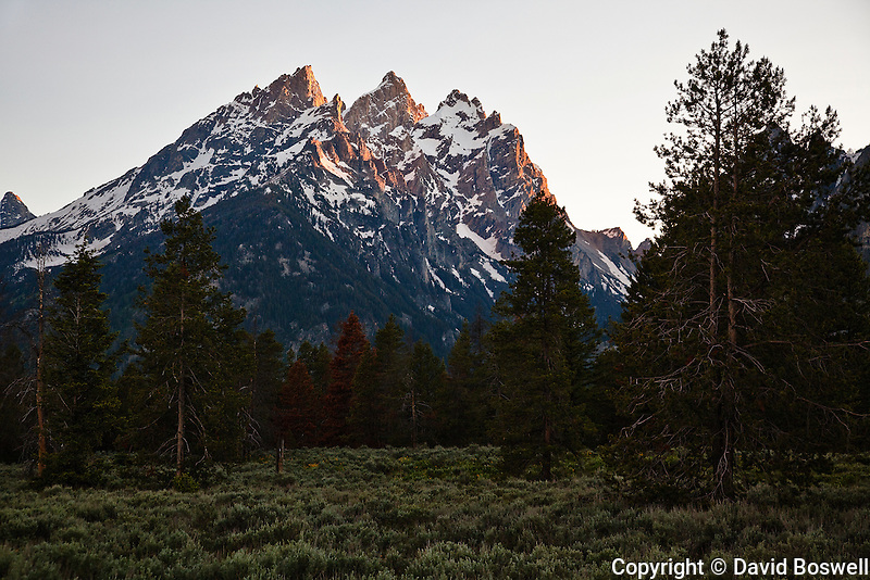 The Cathedral Group of Grand Teton National Park is bathed in the light of the setting sun.  The Cathedral Group consists of Teewinot (12,325 ft.) on the left, Grand teton (13,770 ft.) in the middle, and Mount Owen (12,928 ft.) on the right.