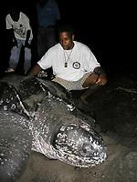 local people involved in sea turtle watching, nesting leatherback sea turtle, Dermochelys coriacea, Dominica, West Indies, Caribbean, Atlantic