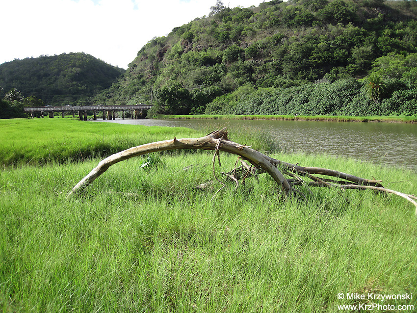 Tree branch in green grass along Waimea River, North Shore, Oahu