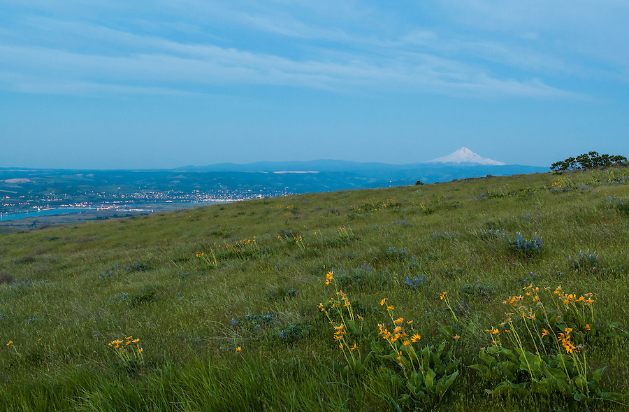 The Dalles, Oregon city lights seen near dawn with Mt. Hood and Balsamroot flowers in the foreground.