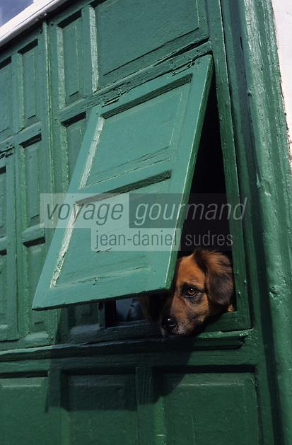 Europe/Espagne/Iles Canaries/Lanzarote/Teguise : Chien à une fenêtre dans une ruelle