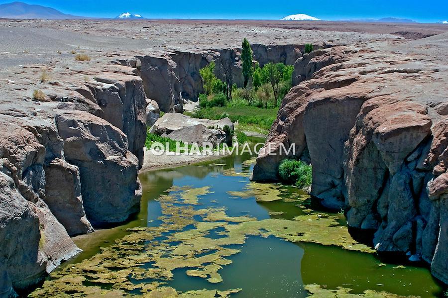 Oásis no Deserto do Atacama. Chile. 2004. Foto de Maristela Colucci.