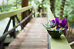 Decorative flower arrangement at Daintree Eco Lodge and Spa.  Daintree, Queensland, Australia