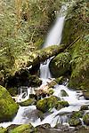 Merriman Creek, Quinault Rain Forest, Washington; Merriman Creek Falls
