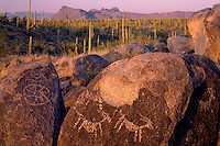 Saguaro cactus and Tucson Mountains<br />