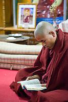 Myanmar, Burma.  Buddhist Monk Reading, Alodaw Pauk Pagoda, Nampan Village, Inle Lake, Shan State.