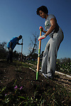 Volunteer Kristen McPherson works at the Kashmere Community Garden on Cavalcade Saturday Feb. 27,2016.(Dave Rossman Photo)