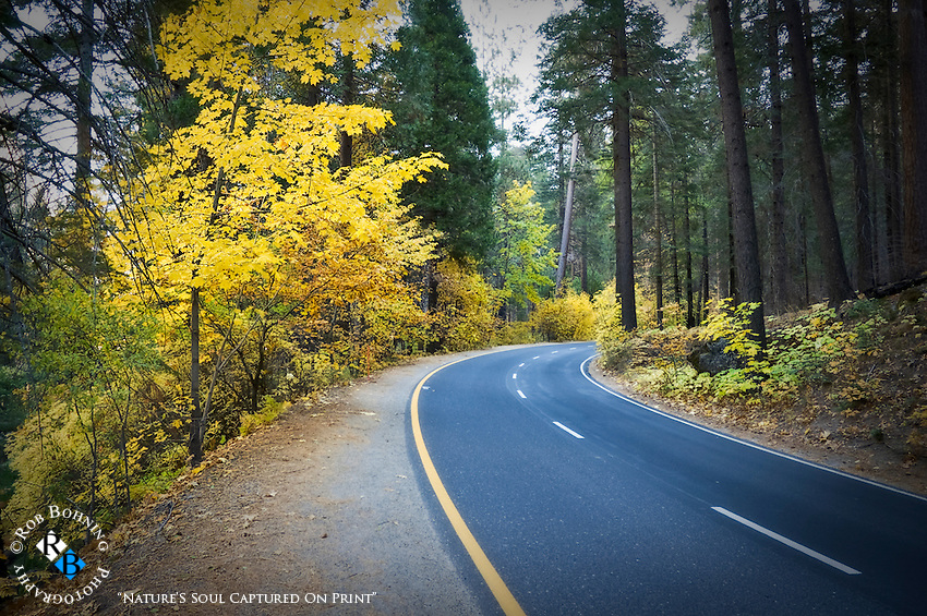 A drive along Highway 120 through the Yosemite Valley floor on an October day