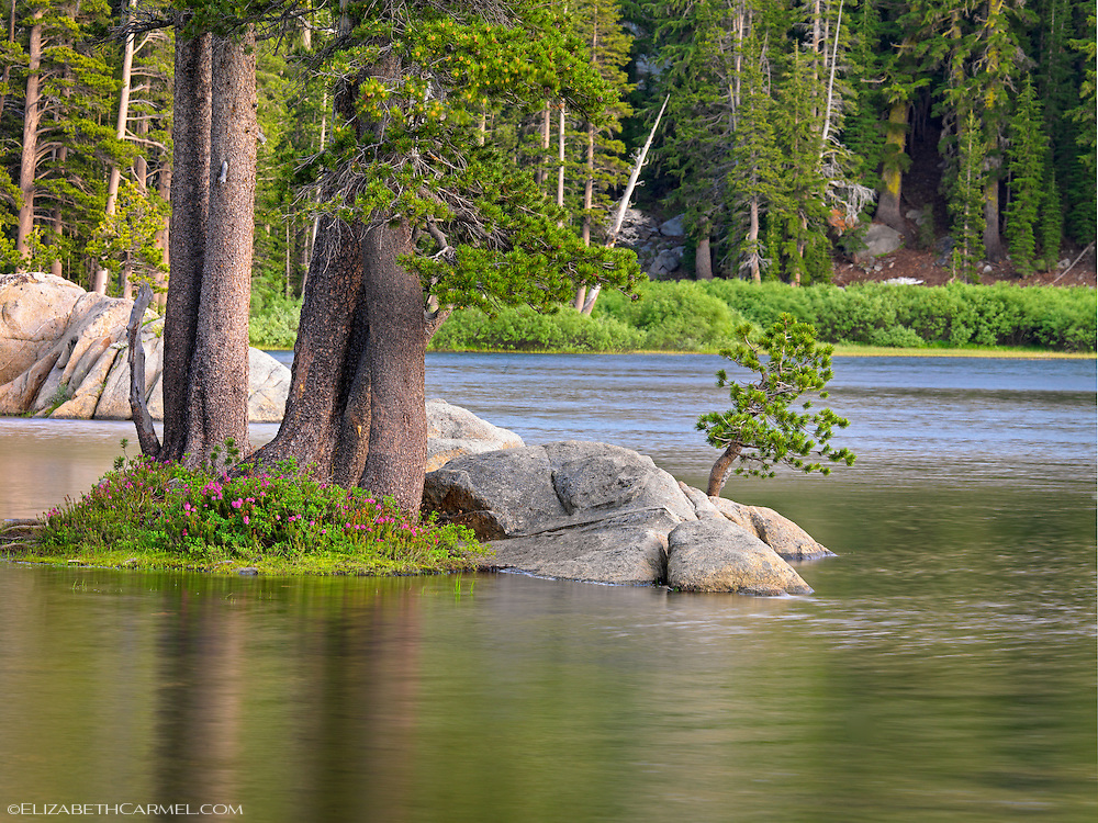 Summer Pond, High Sierra