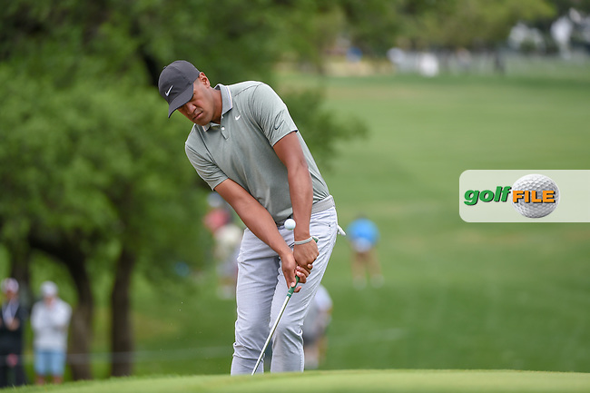 Tony Finau (USA) chips on to 1 during day 4 of the Valero Texas Open, at the TPC San Antonio Oaks Course, San Antonio, Texas, USA. 4/7/2019.<br /> Picture: Golffile | Ken Murray<br /> <br /> <br /> All photo usage must carry mandatory copyright credit (© Golffile | Ken Murray)