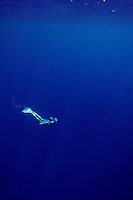 Elisabeth Kristoffersen from Norway freediving in the waters of Ras Mohammed national park in Sinai, Egypt. ©Fredrik Naumann/Felix Features