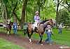 Off My Cloud before The Our Mims Stakes at Delaware Park on 5/18/13