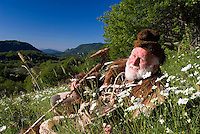 Barrea, Abruzzo, Italy, June 2008. Pasetta shows his secret places dressed in traditional wolf hunters costume. The owner of camping La Genziana, is the grandson of the last wolf hunter of the Abruzzo mountains. Nowadays the wolfs are protected by the national parks. Photo by Frits Meyst/Adventure4ever.com