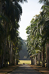Botanic garden of Kandy