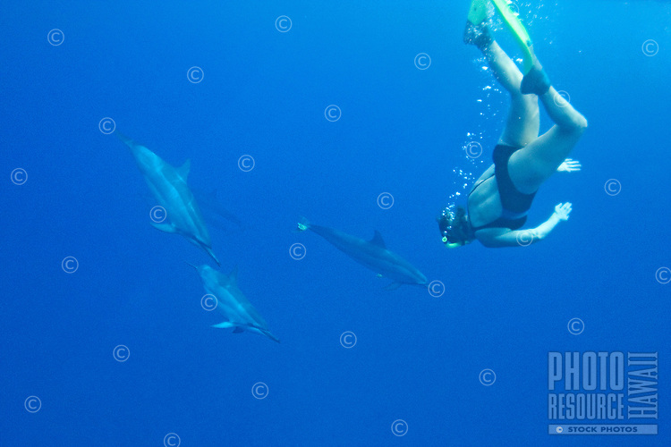 Snorkeler and Spinner Dolphins; Stenella longirostris
