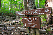 Trail junction of Cathedral Forest Trail and Holt Trail which climbs to the summit of Cardigan Mountain in Orange , New Hampshire USA. Cathedral Forest Trail is considered one of the easiest routes to the summit of Cardigan