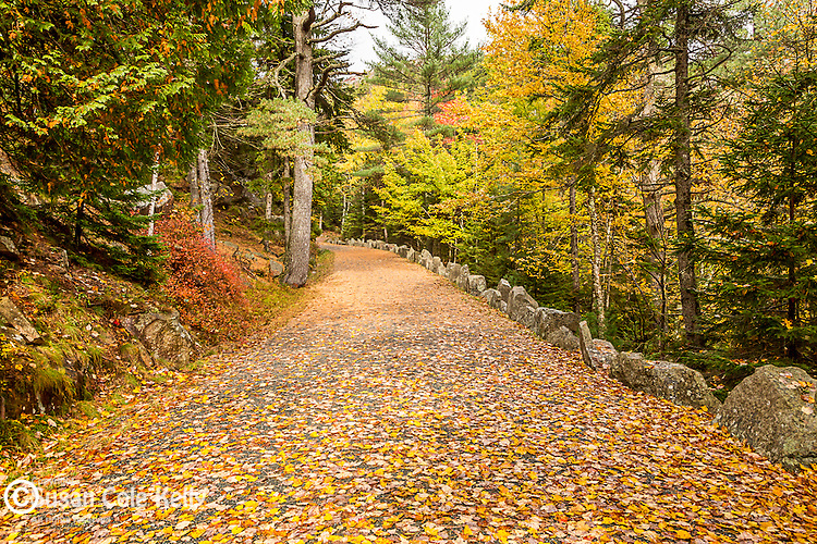 Fall foliage on a carriage road near Hadlock Pond in Acadia National Park, Maine, USA