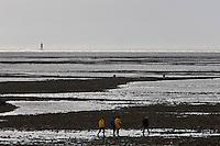 Europe/France/Poitou-Charentes/17/Charente-Maritime/Ile de Ré/Ars-en-Ré: Pêche à pied au  Martray .Le Martray est un isthme de l'Île de Ré
