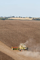 14.9.2020 Harvesting Beans in Rutland <br /> ©Tim Scrivener Photographer 07850 303986<br />      ....Covering Agriculture In The UK.